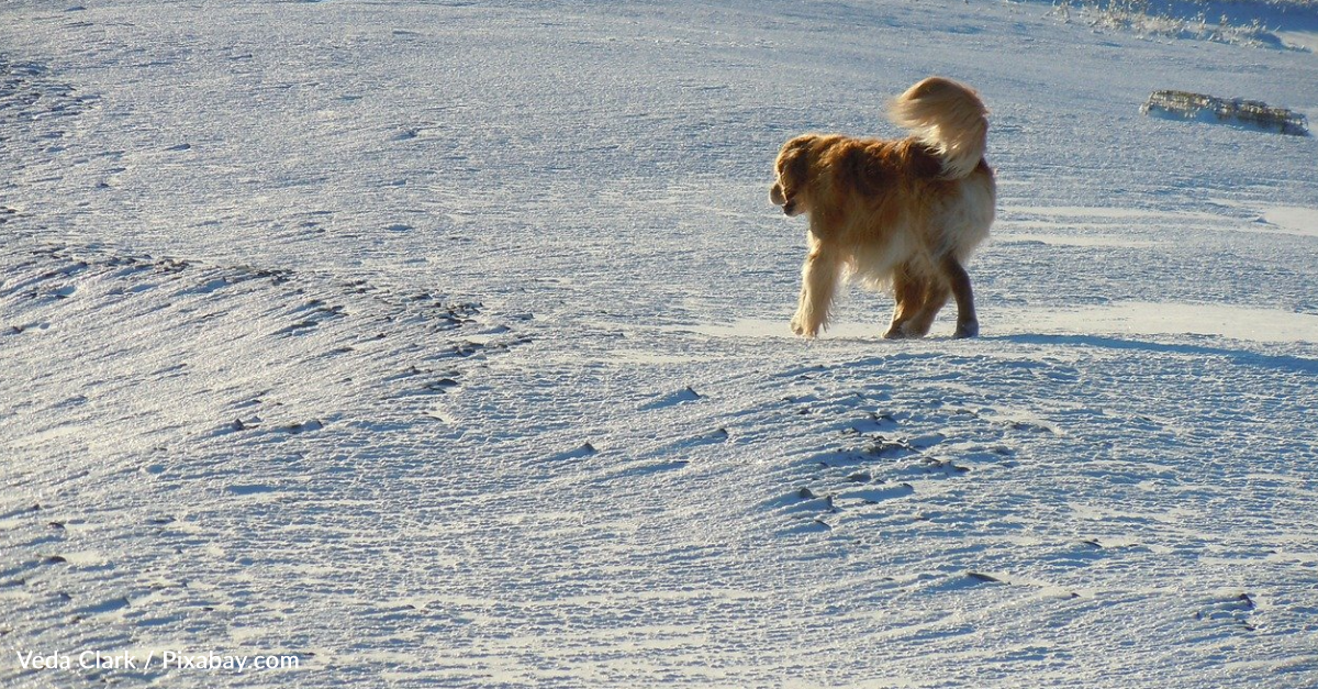 15-Year-Old Blind Dog Loves Playing In The Snow