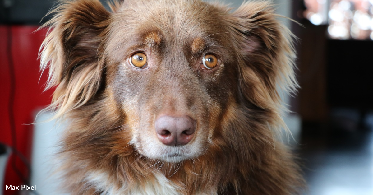 Couple Drives For Hours To Save A Dog That Is About To Be Euthanized