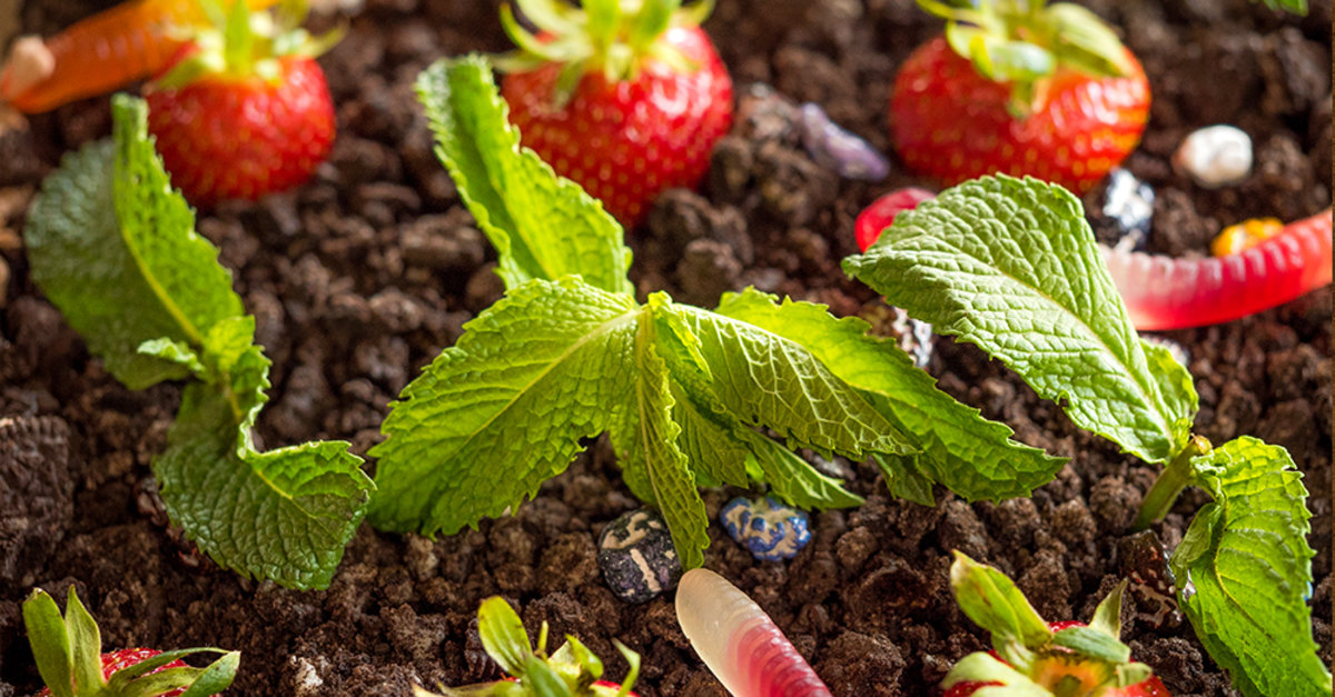 Get Into Gardening With Your Kids This Is Dirt And Worms
