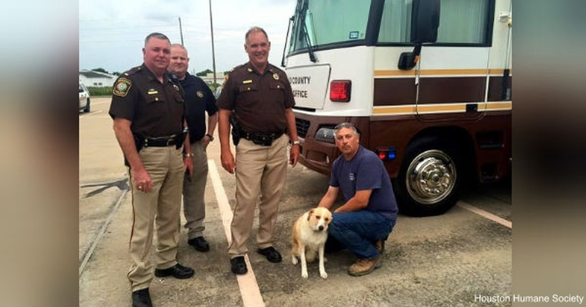 Sheriff Adopts A Dog That Was Found Chained To A House In A