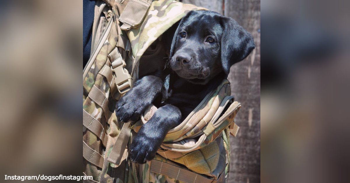 Their Guard is Never Down: 6 Surprising Ways Service Dogs Help Vets with PTSD