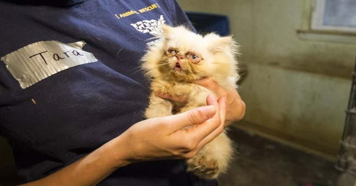 A Dying Kitten Was Rescued From A Puppy Mill Vets Said