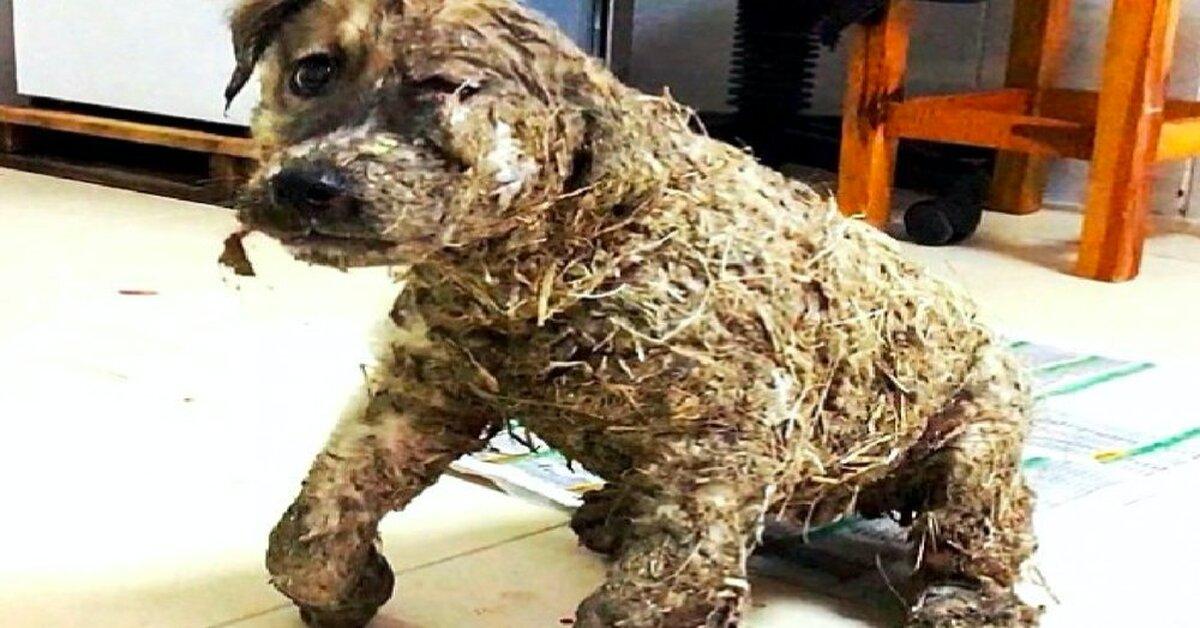 Dog Who Got Ears Cut Off In Turkey