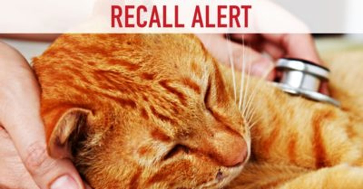 What Food Can Lead To Thiamine Deficiency In Cats