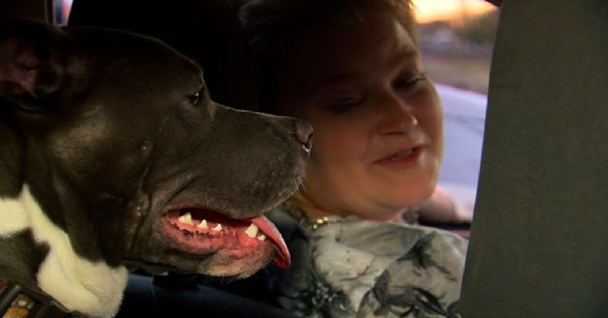 Uber Driver Adopts Pit Bull After Passenger Left Her Behind In Car