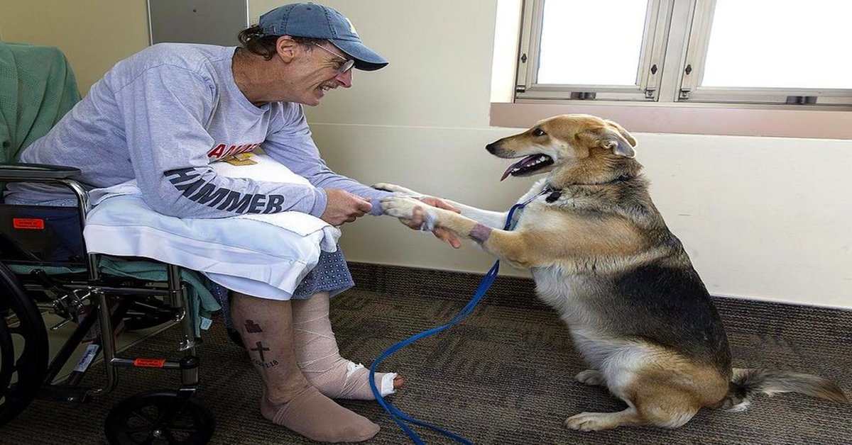 Man Reunites With His Beloved Dog In The Hospital After They Were Separated In A Hiking Accident