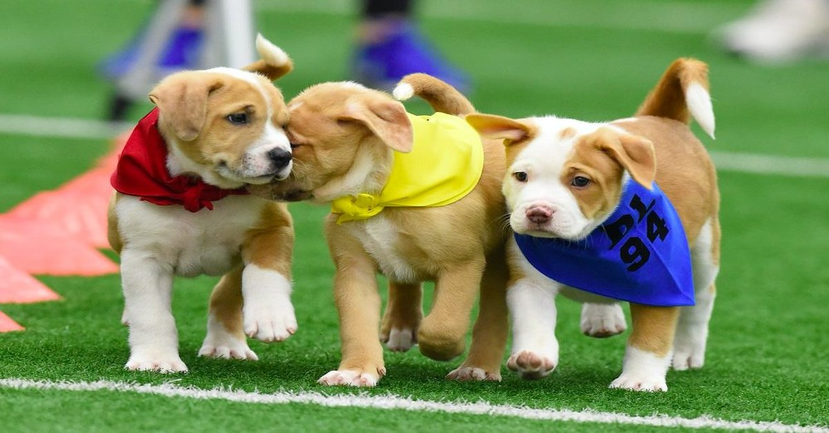 Newborn Puppies Were Rescued From A Freezing Dumpster. Now, They're On Their Way To The Big Leagues