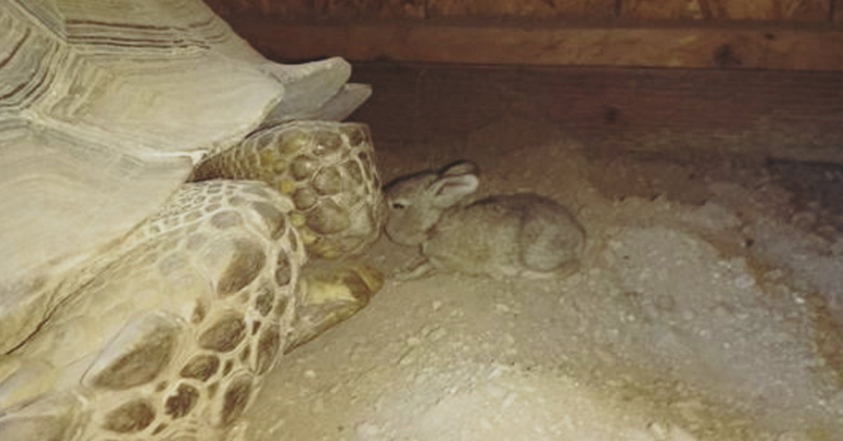 Bunny In Need Sneaks Into Tortoise's Shelter, Then Bunny Gets Even More Than A New Best Friend