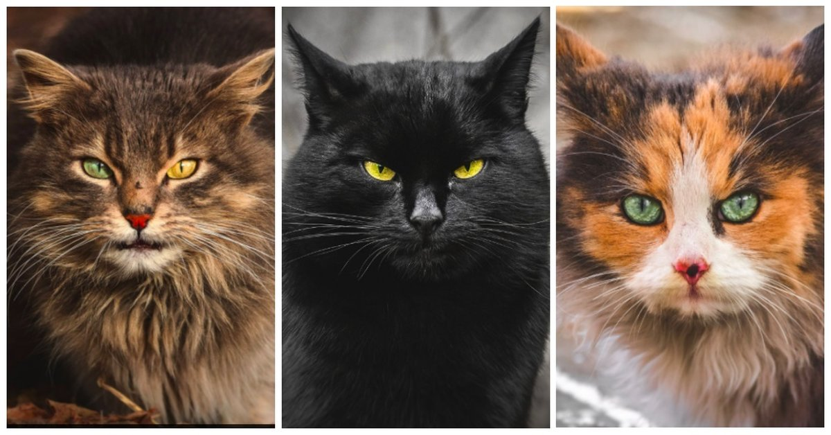 Teen Captures Homeless Cats In Stunning Photos, Showing They're All Worthy Of A Beautiful Life!