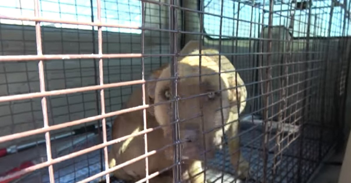 Dog Was Saved In Front Of An Abandoned House. Then, They're Baffled To See Why She Didn't Hide