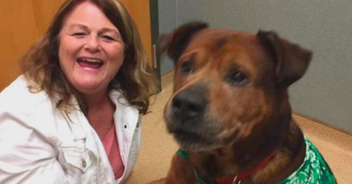 Senior Dog Rescue Virginia