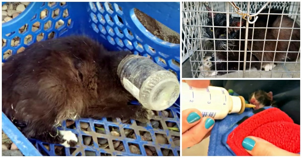 A Dying Mother Goes As Far As She Can To Save Her Unborn Kittens