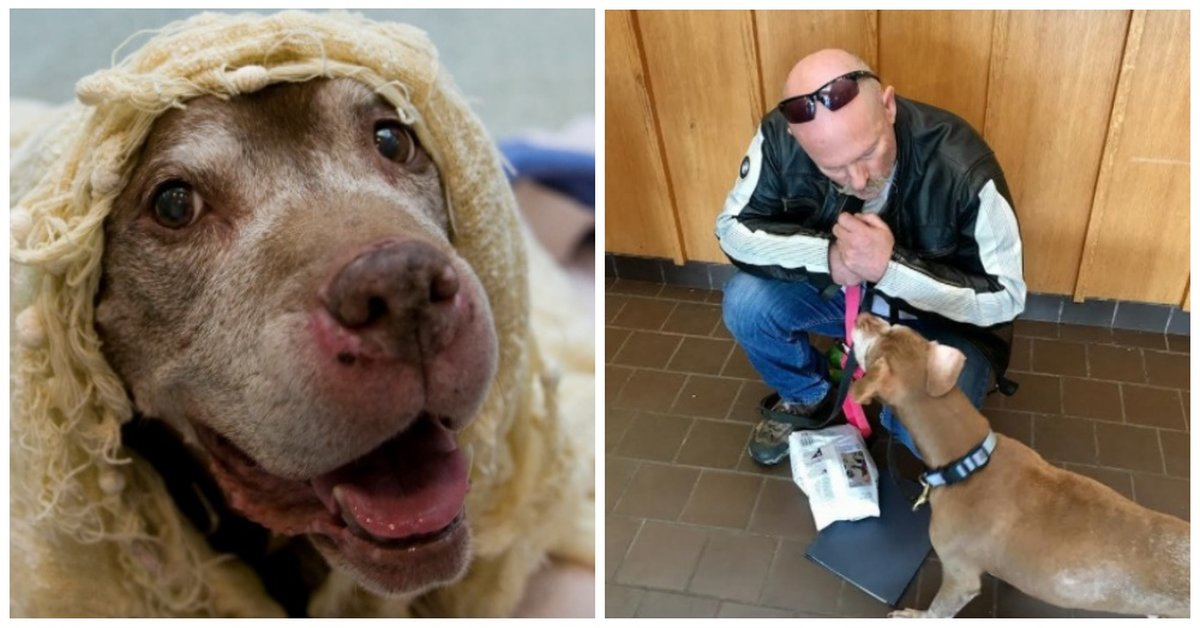 18-Year-Old Dog Is Left Homeless After Her Human Passes Away, See What A Shelter Does Just For Her!