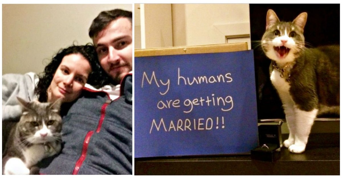 running man wedding after dating