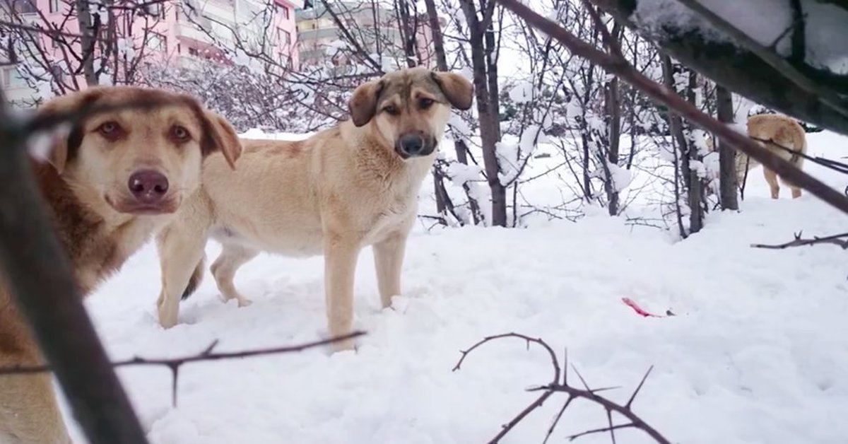Strays Are Struggling To Survive In Freezing Temps, But These People Are Doing Their Best To Help