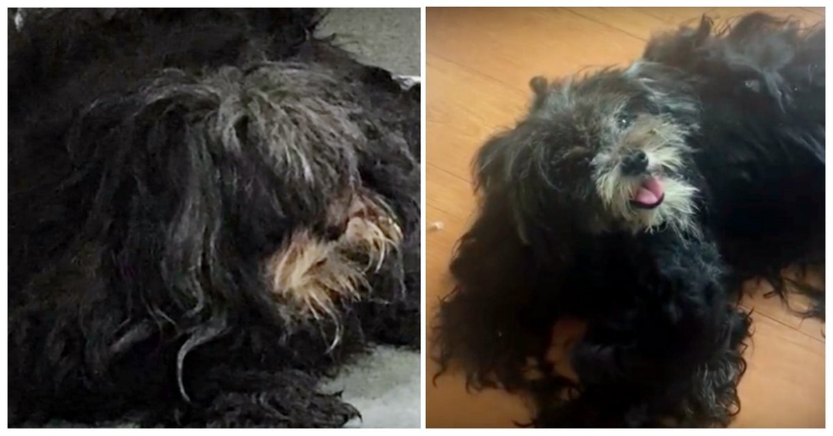 Next On The List To Be Euthanized, Dakota Gets A Second Chance And A Makeover!
