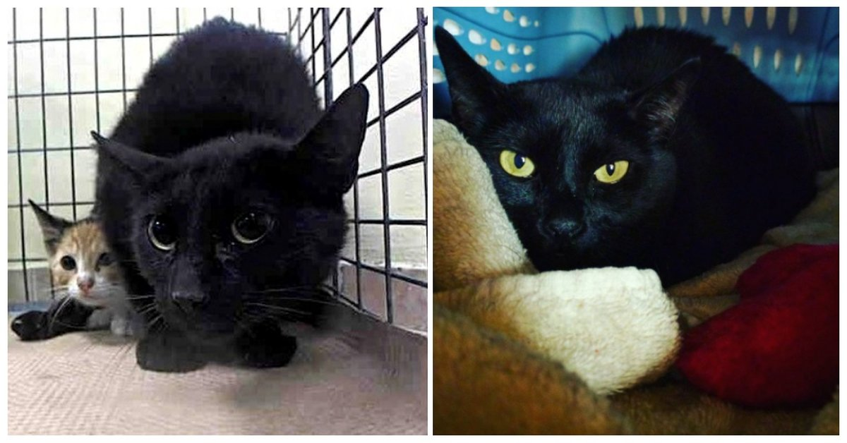 24 Hours Before Being Euthanized Fearful Cat Gets A