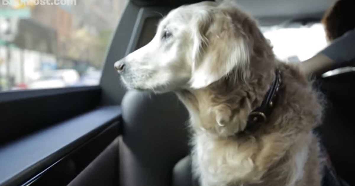 Remembering Bretagne, The Last 9/11 Search And Rescue Dog