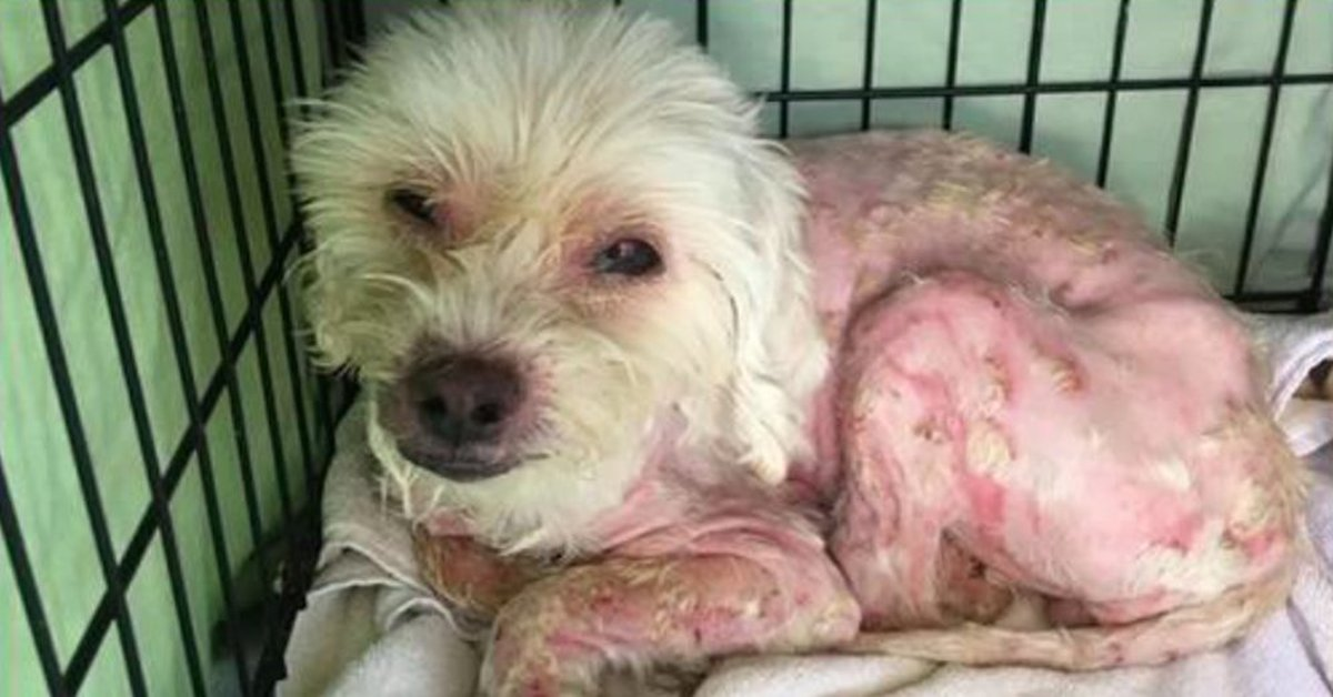 Dog Stolen In Home Burglary Found Months Later In Awful Condition