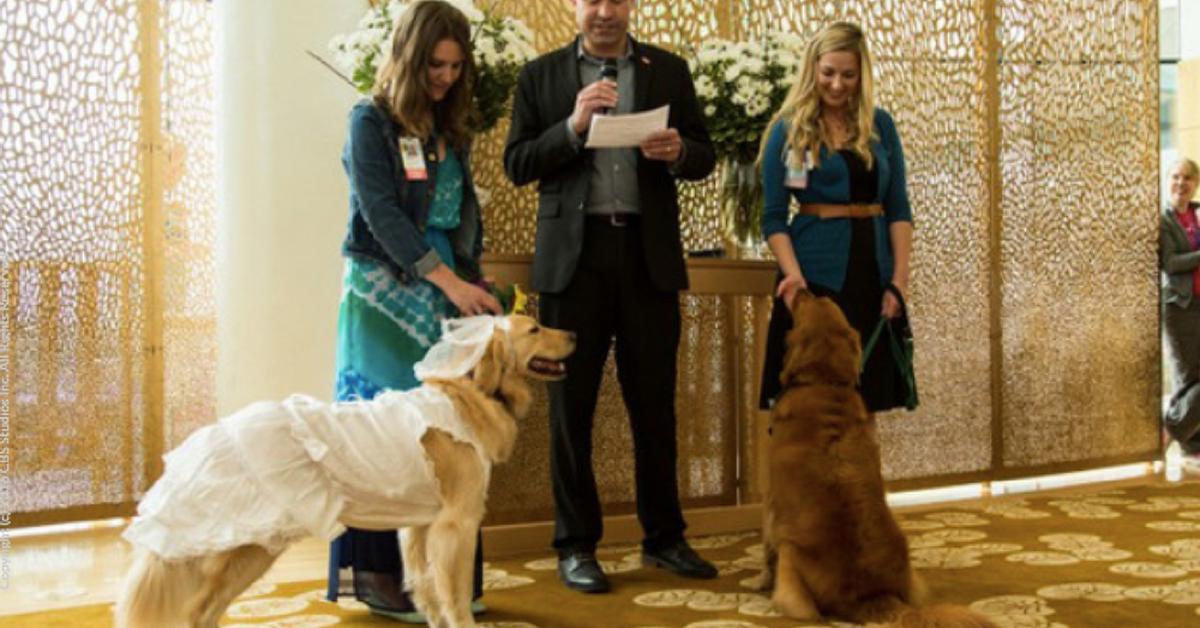 Kansas City Therapy Dog Training