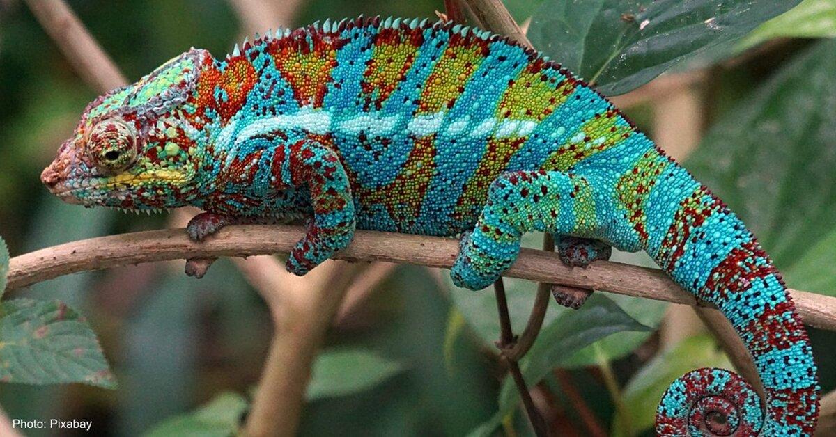 animals colorful rainforest most site