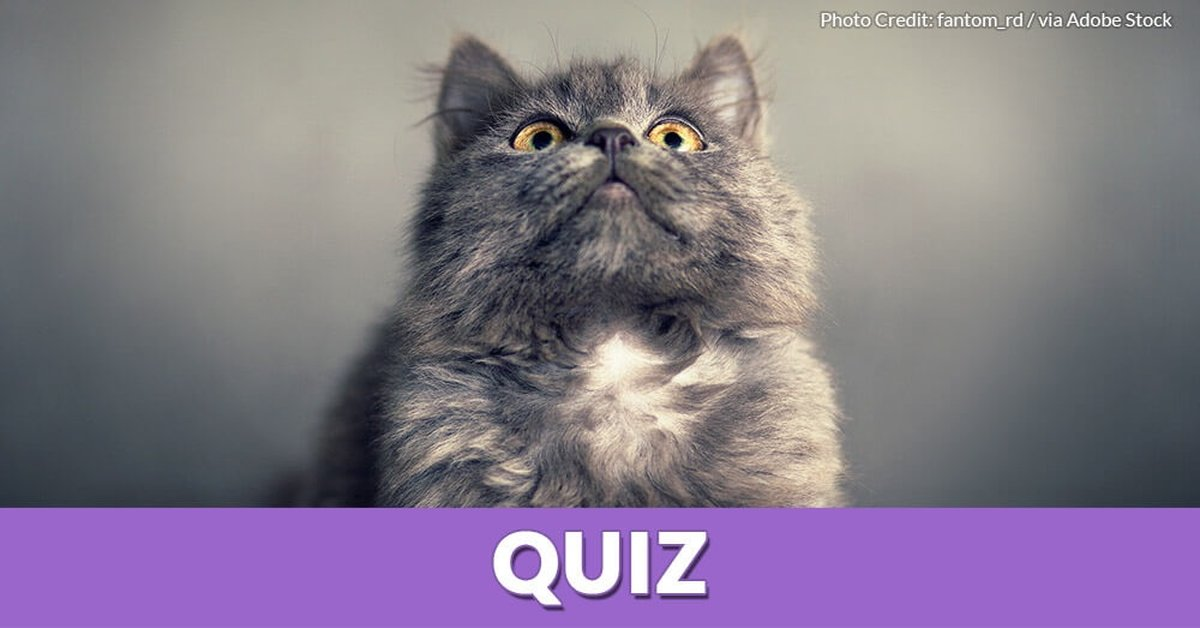 Which Cat Breed Is Right For Me Test