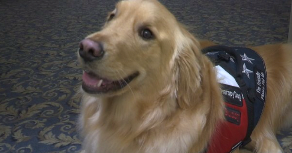 Buddy The Therapy Dog Helps Comfort Grieving Guests Who Come To Funeral Home
