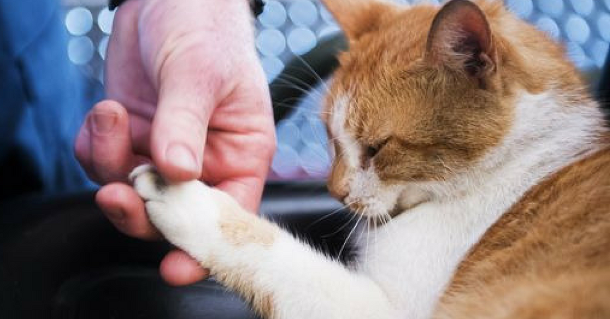 From Stray To Arson Cat, Flame Now Helps Lift The Spirits Of Firefighters
