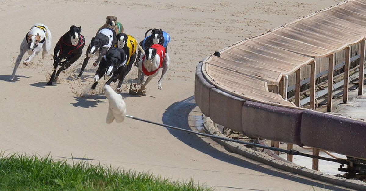Greyhound Mobile Site