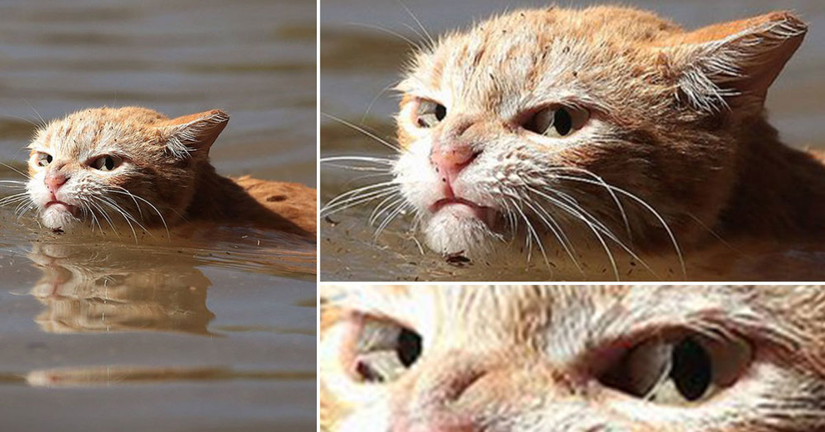 Angry Cat Escaping Flood Shows The World What Texans Are ...