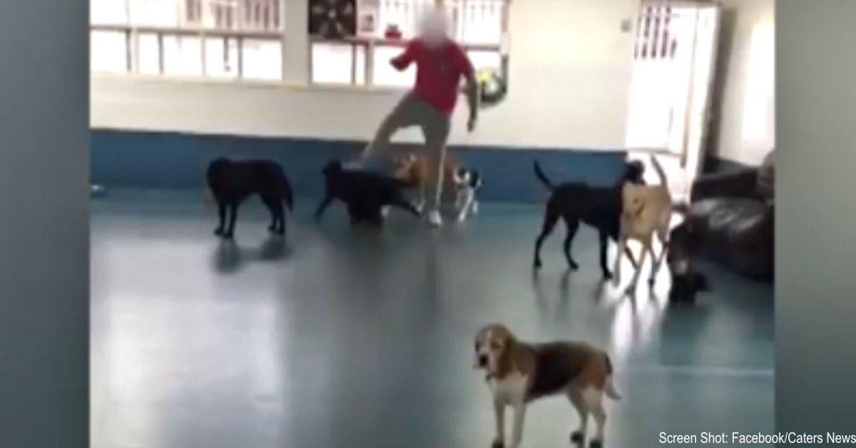 Doggy Daycare Staff Member Caught On Camera Kicking Dogs