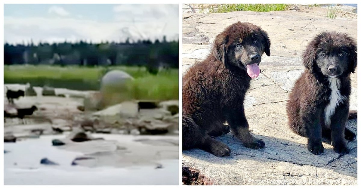 Boater Finds Seven Abandoned Puppies On Deserted Island Crying From Starvation