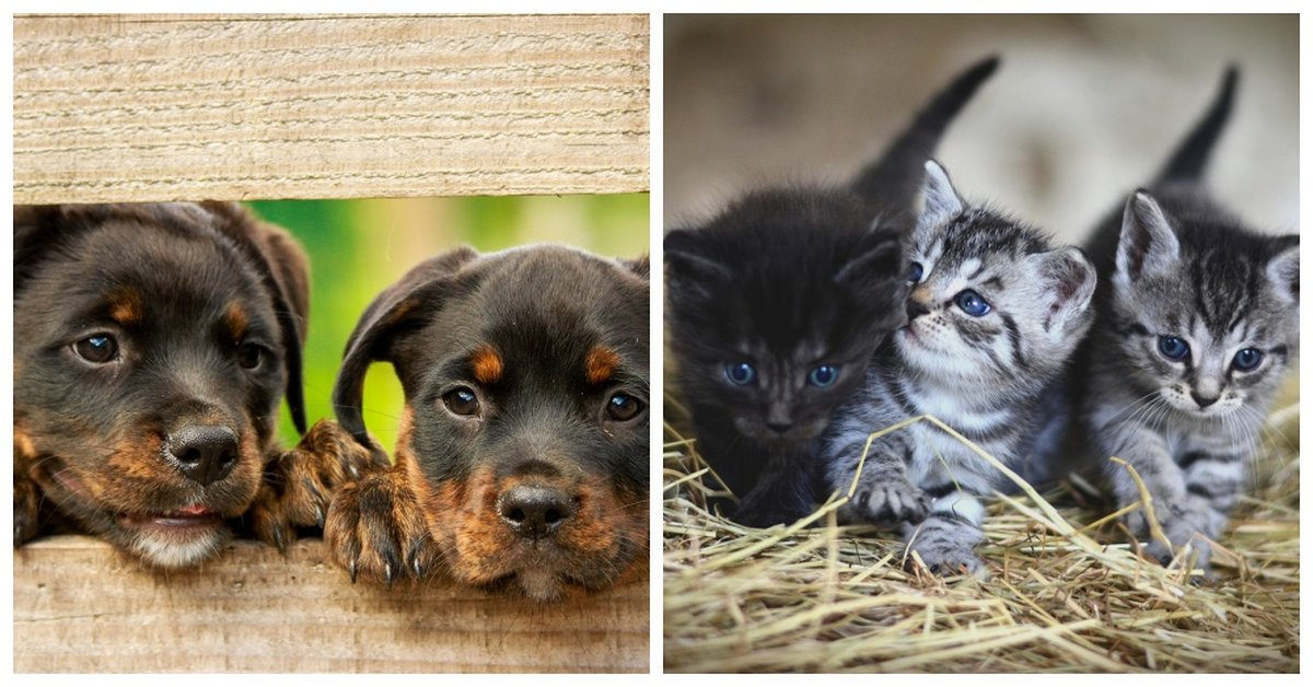 Government Passes New Law That Bans Pet Shops From Selling Puppies