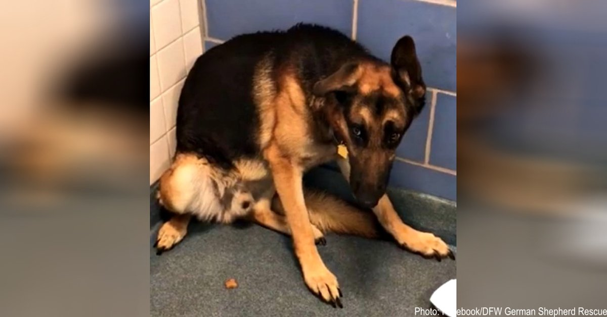 Family Dumps Loyal Dog At Shelter Because They Are Having A Baby