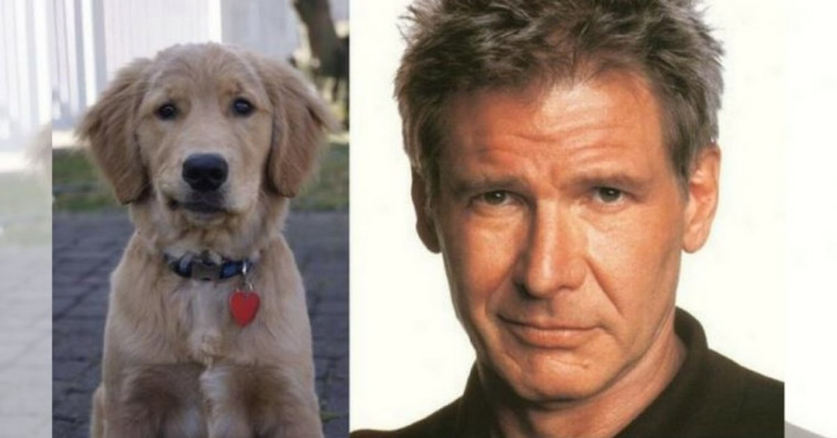 12 Celebrity Snapshots And Their Amazing Canine Look-Alikes
