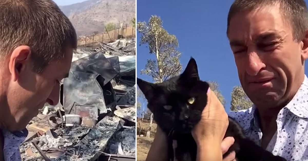 Tearful Reunion As Cat Found 9 Days After Wildfire Destroys Family Home