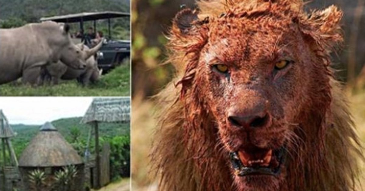 Three 'Rhino Poachers' Eaten By Lions After Breaking In To South African Game Reserve