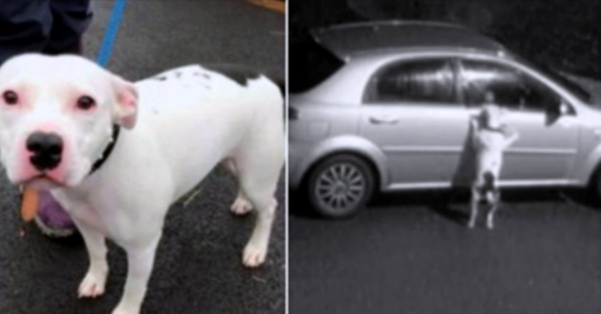 Dog Desperately Tries To Get Back Into Family's Car After Being Abandoned