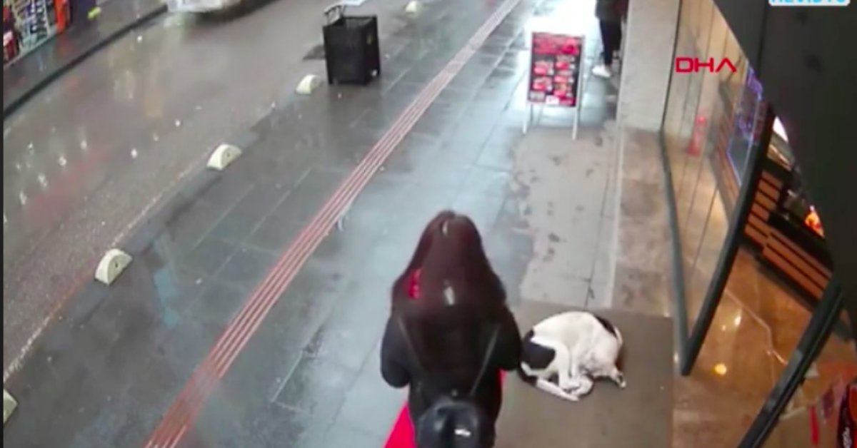 Woman Shows A Shivering Stray Dog Some Kindness And The Act Was Captured on Video