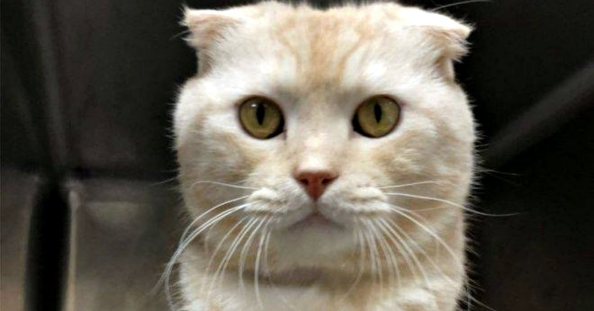 Man Sends His Unwanted Cat In A Box Via Postal Service To Shelter