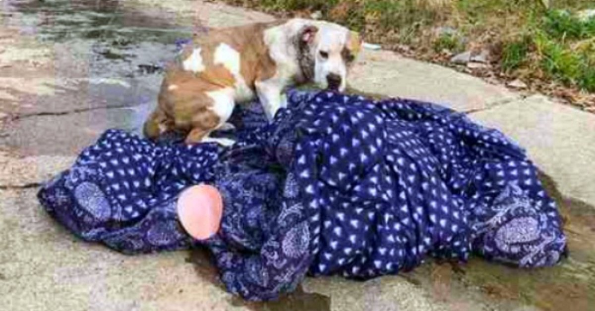 Family Dog Abandoned On The Curb Refused To Leave Her Blanket