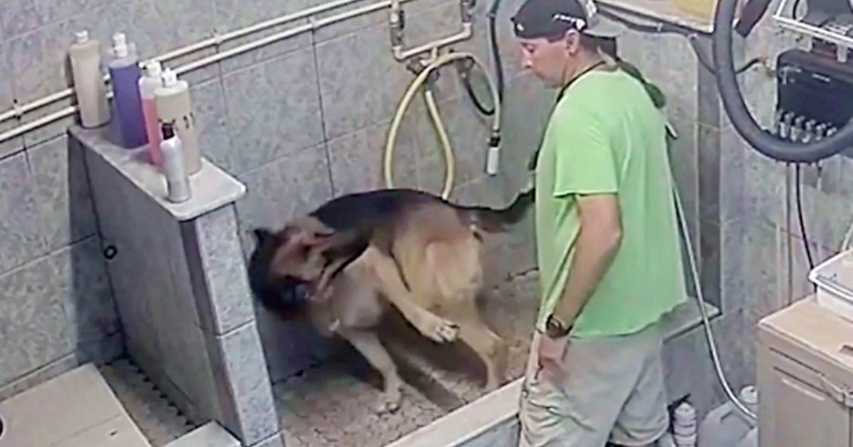 Groomer Arrested For Breaking Service Dog's Tail After It 'Wouldn't Sit Still'