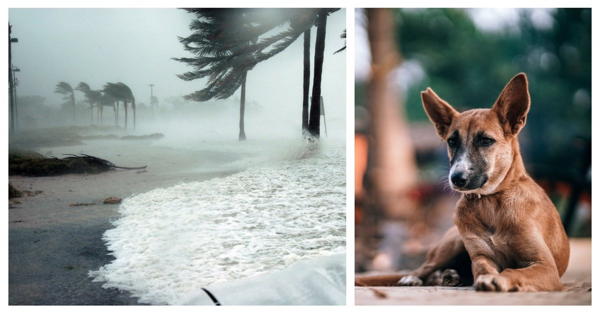 New Florida Bill Would Punish People That Abandon Their Dogs During A Hurricane