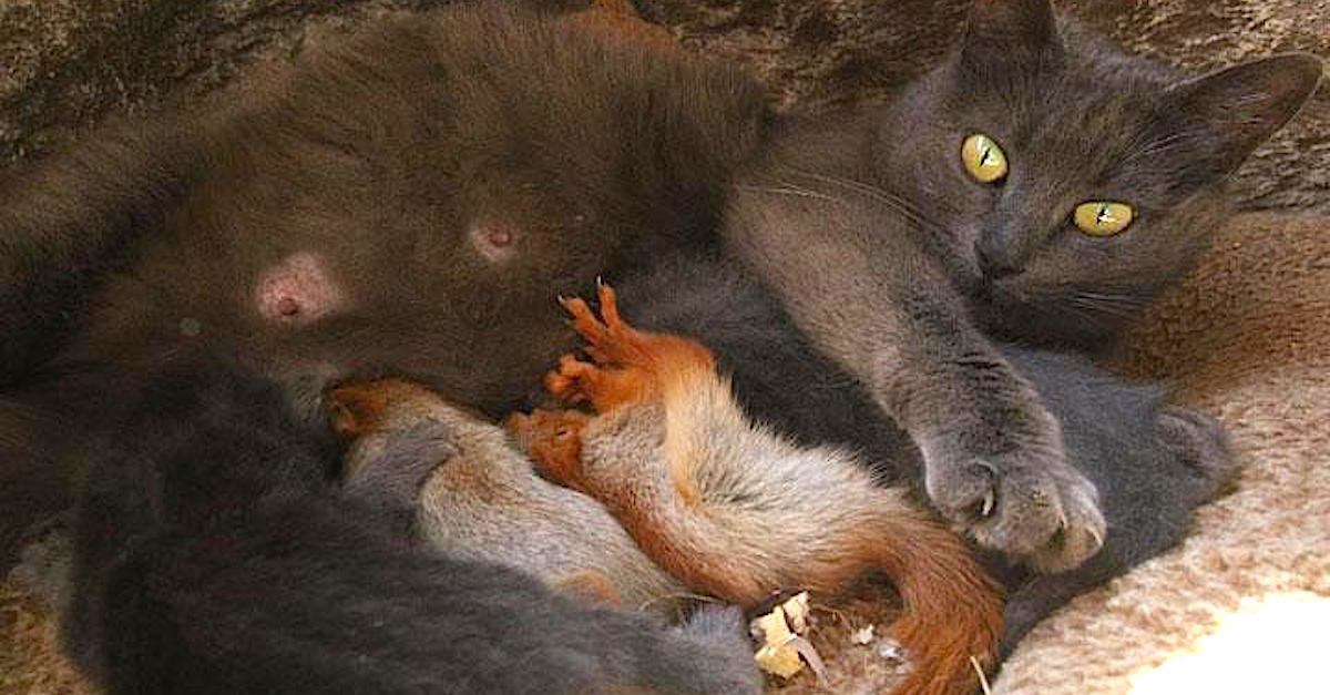 Mama Cat Delivers 4 Kittens And Then Doubles Her Family By Adopting 4 Orphaned Baby Squirrels