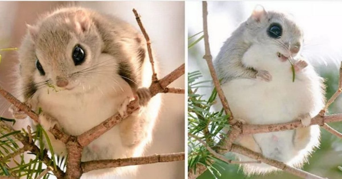 These Adorable Squirrels Can Only Be Found On One Japanese Island