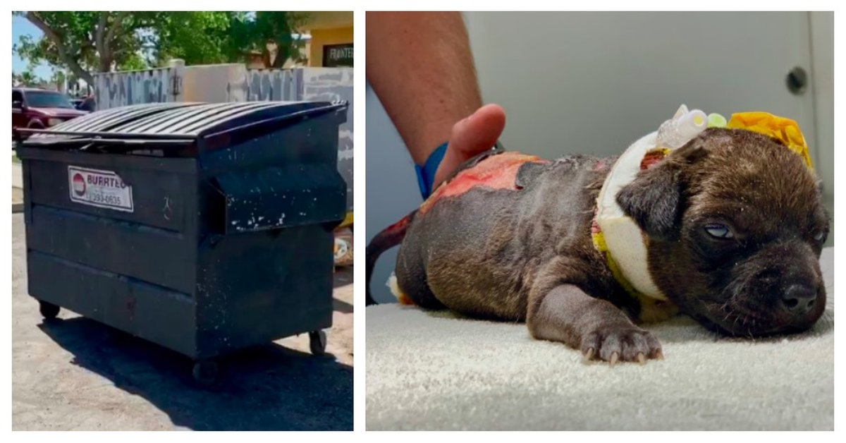 Badly Burned Puppy Found In Trash After Passerby Heard Her Cries