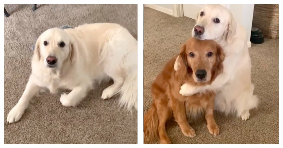Dog Apologizes To His Brother For Eating His Food In The Most Adorable Way