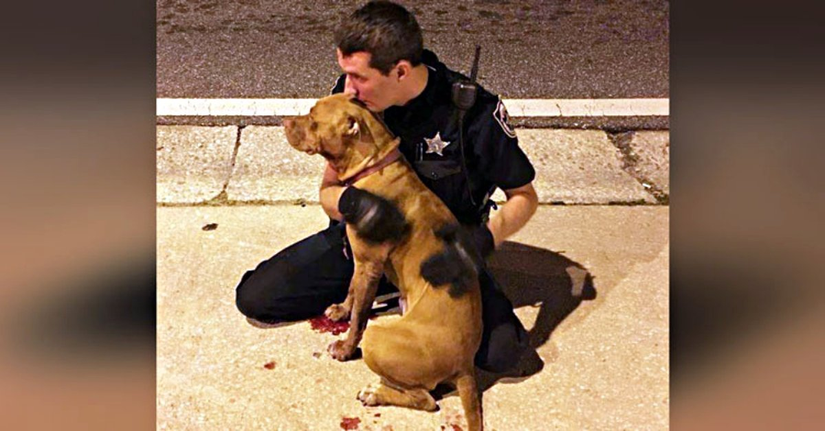 Cop Responding To Call About Pit Bull Realizes She's Hurt & Refuses To Leave Her Side
