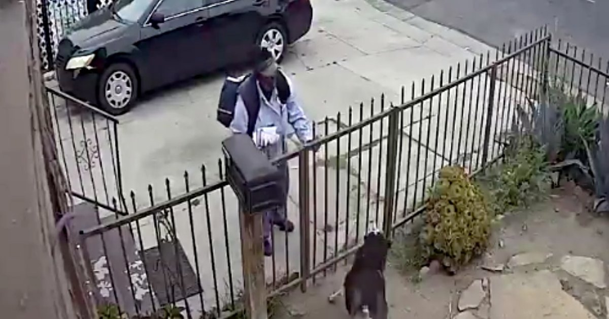 USPS Worker Captured On Surveillance Camera Pepper-Spraying A Friendly Dog