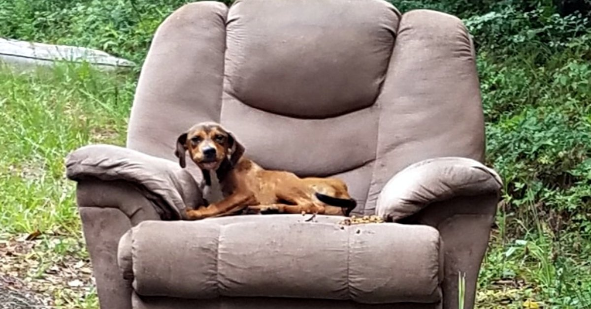Animal Control Officer Found Starving Puppy Dumped On The Side Of The Road Seeking Comfort In Old Recliner